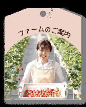 card_farm